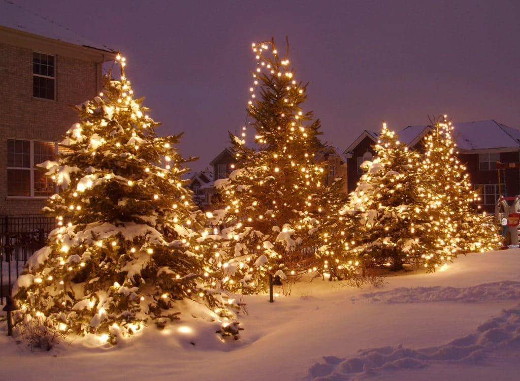 Trees Lighting Lights Professional Holidays